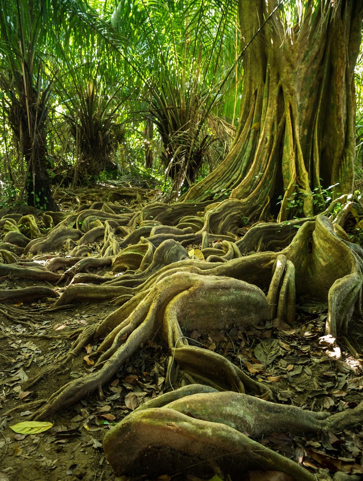 Costa Rica's jungle